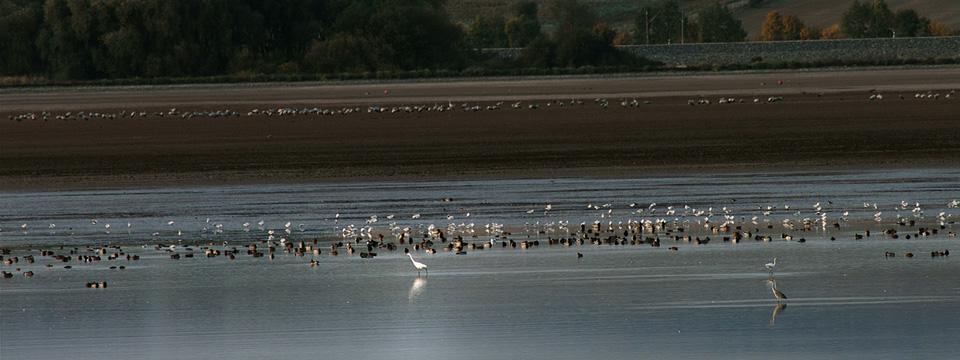 Vögel auf dem Helmestausee, Foto: Atelier Papenfuß