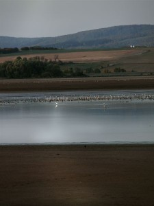 Am Stausee Kelbra rasten tausende Vögel