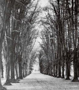 Eine stattliche vierreihige Lindenallee gewährte früher Ausblicke bis nach Bad Frankenhausen. Nach dem Bau des Neuen Schlosses bildete dieses Gebäude das Ende der Sichtachse (Foto vor 1945). Die Reste der überalterten Allee wurden nach 1960 gerodet.