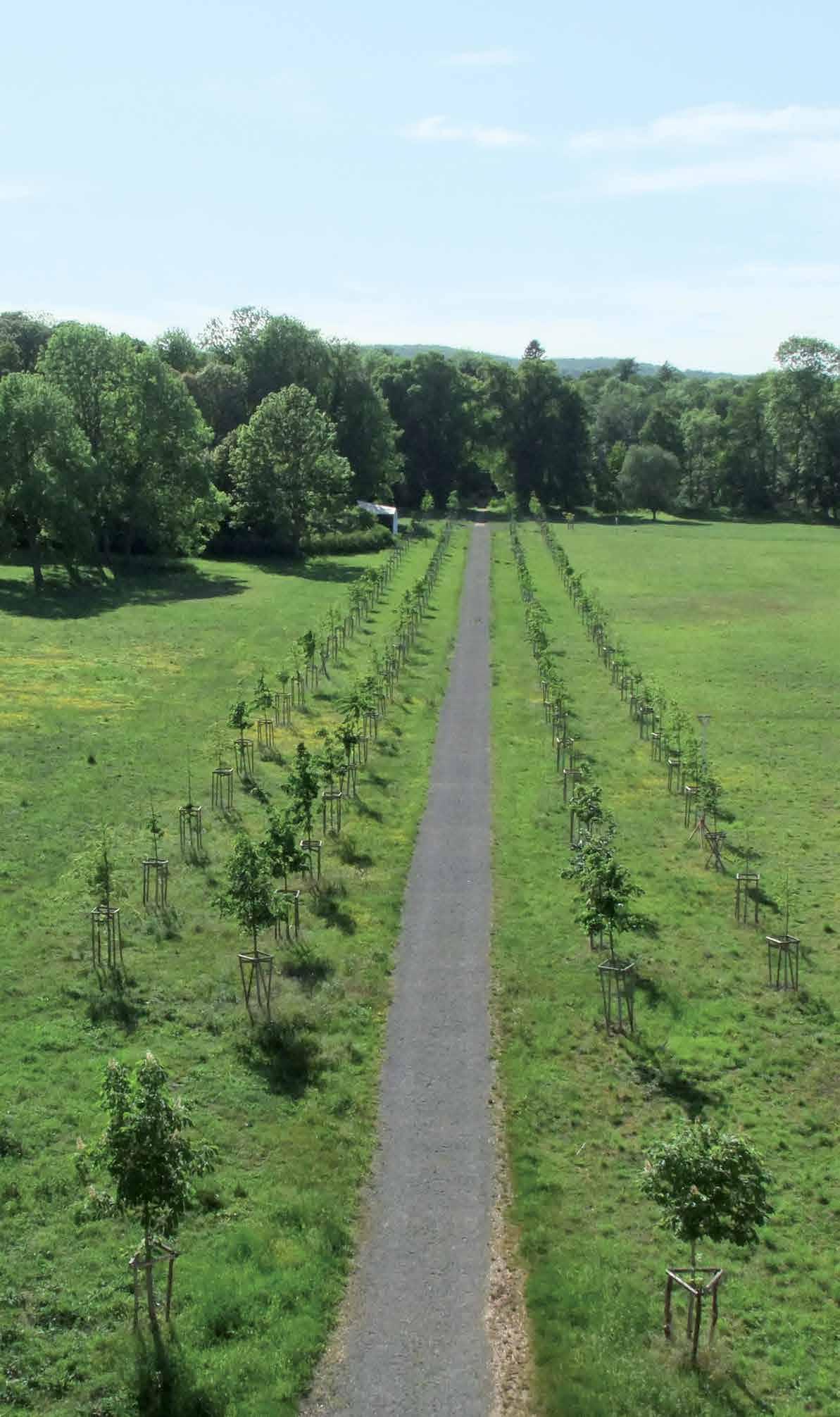 Die nachgepflanzte vierreihige Lindenallee. Aufnahme vom Neuen Schloss aus dem Jahr 2012