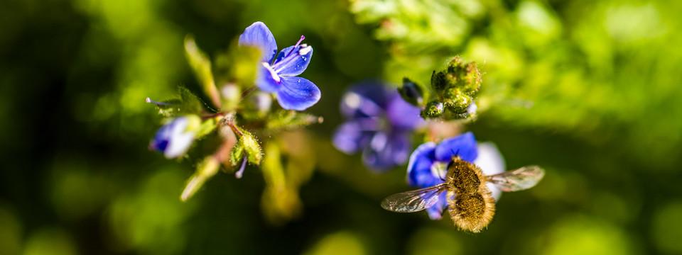 Miri's Kyffhäuser Blog - Insektenwelt
