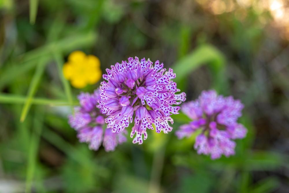 Miri's Kyffhäuser-Blog - Orchideen