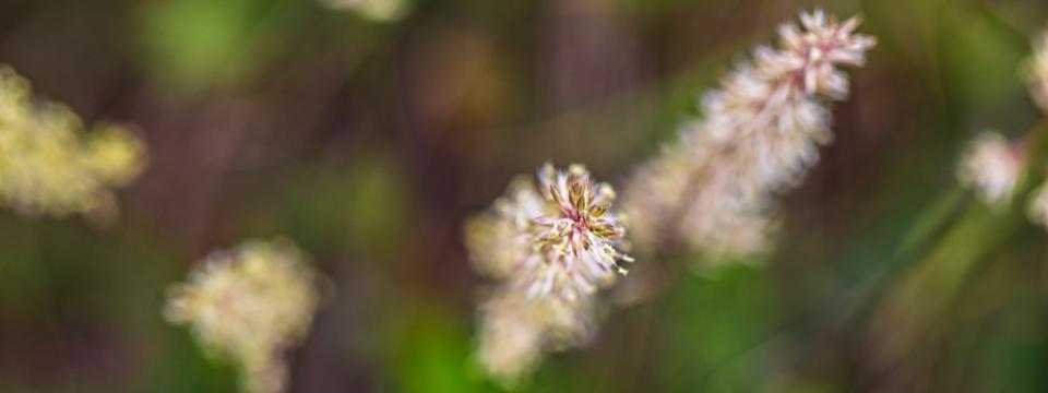 Miri's Kyffhäuser Blog - August - Artenvielfalt