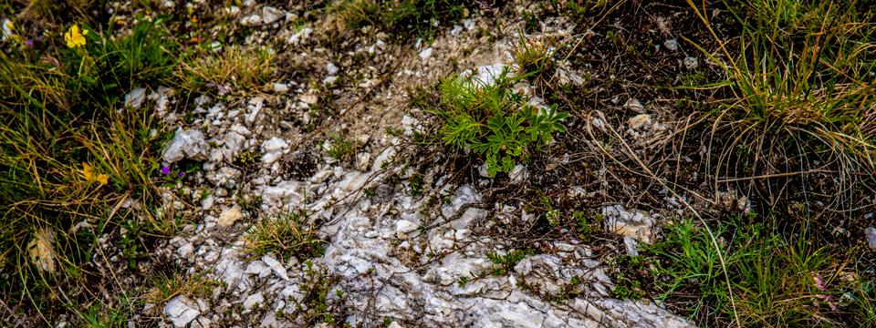 Miri's Kyffhäuser Blog - August - Kalkgestein und Artenvielfalt