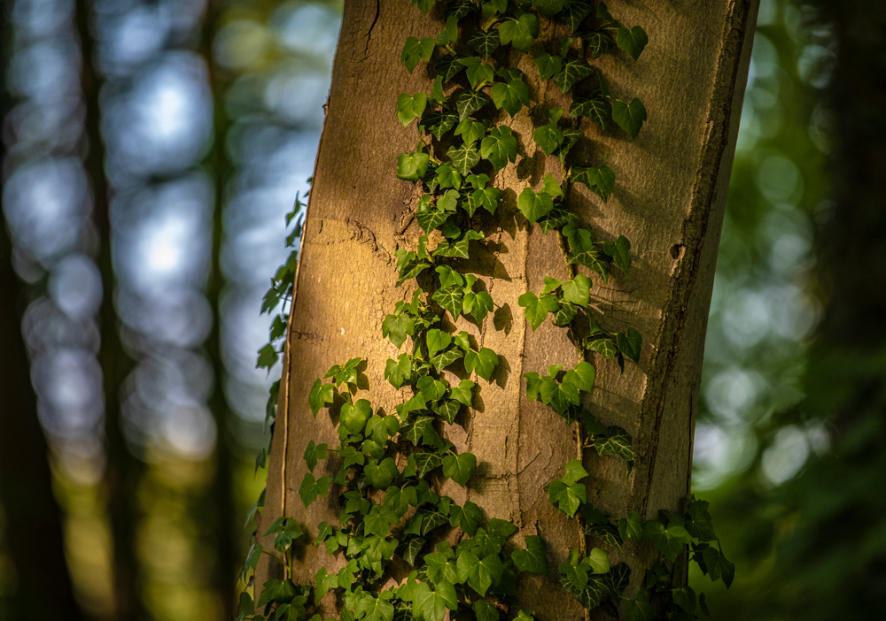 Miris Kyffhäuser Blog - Waldlicht und Waldduft
