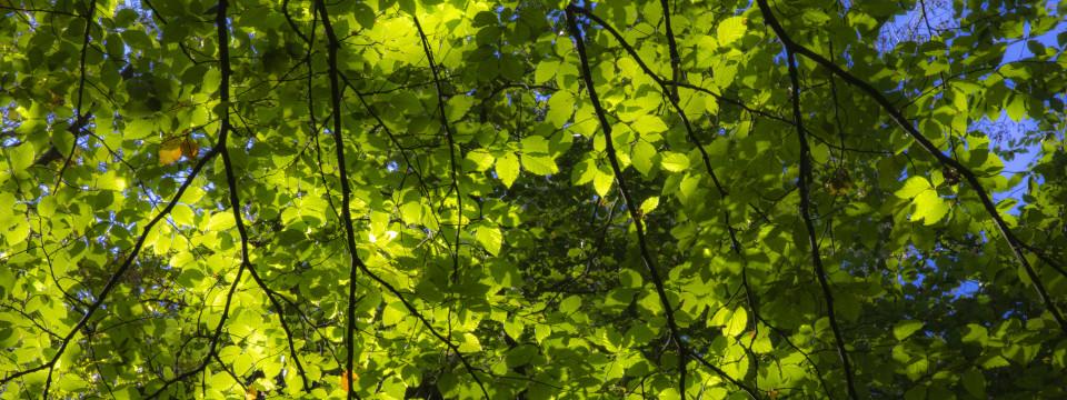 frisches Blattgrün