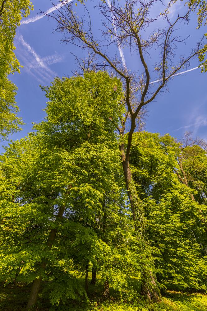 englischer Garten in Bendeleben
