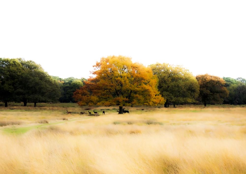 Der mystische und farbenfrohe Herbst