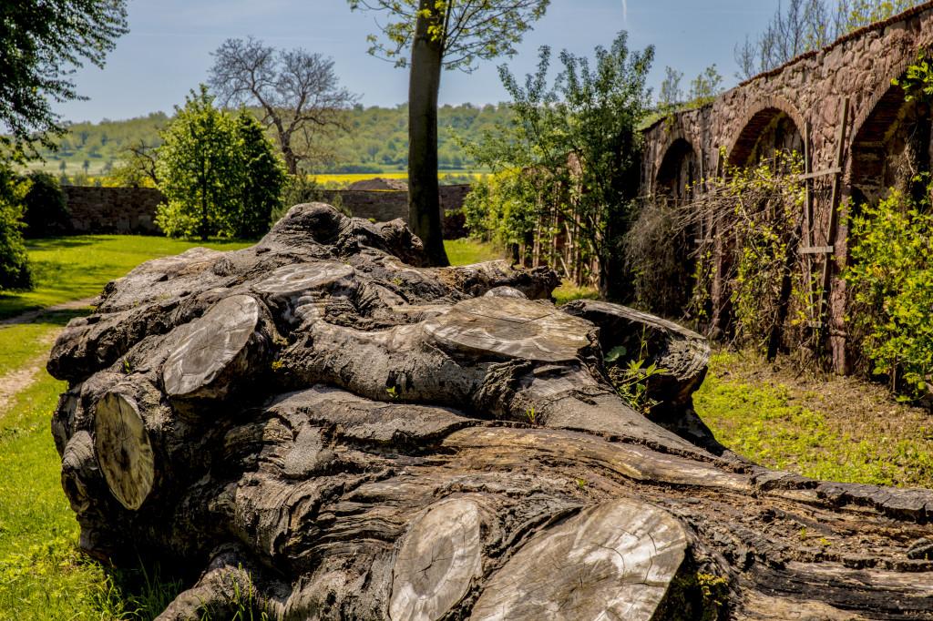 englischer Garten mit Blutbuche und historischer Artenschutzmauer