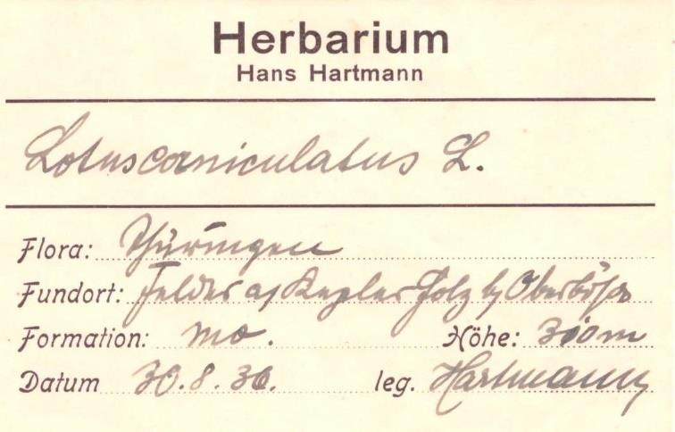 Herbaretikett von H. Hartmann